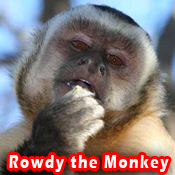 Rowdy_copy